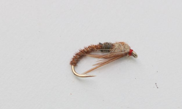 Cove Pheasant tail Nymph (variant)